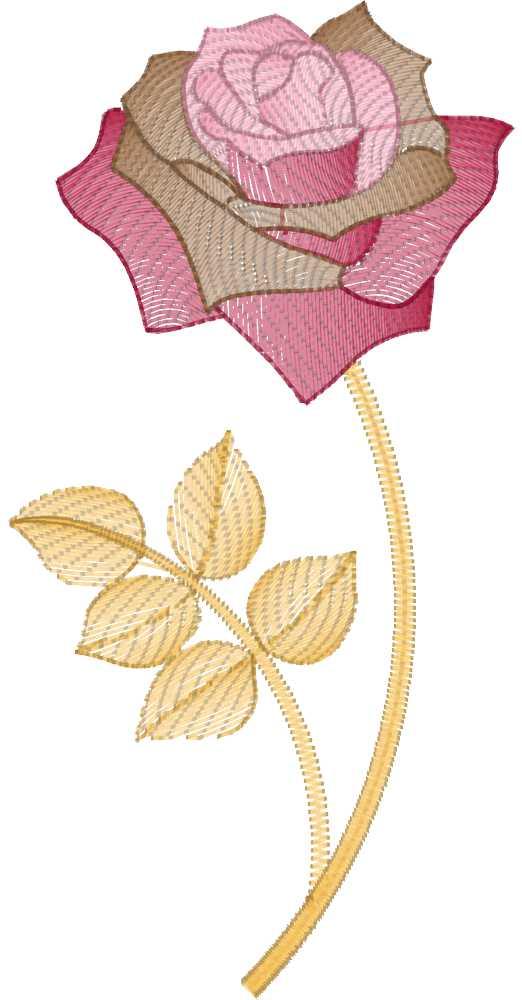 Beauty roses Vol.2